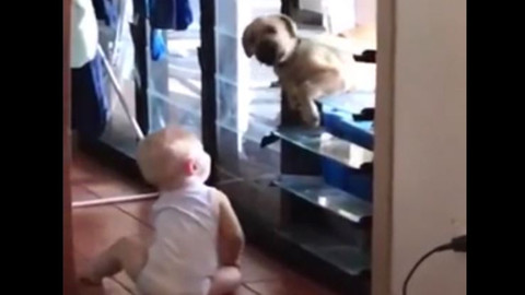 Soğukta üşüyen köpeği içeri alan dünya tatlısı bebek