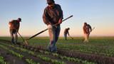 2018 tarım destekleri ne zaman ödenecek? 2018 destekleme ödemeleri sorgulama