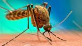 İstanbul'da Batı Nil Virüsü tehlikesi!