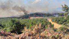 Pakdemirli, Keşan'daki yangın bölgesinde inceleme yaptı
