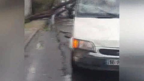 Yağış sonrası ağaç aracın üstüne devrildi