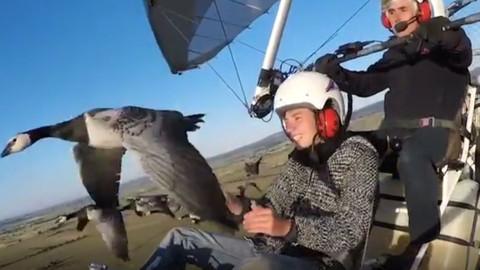 Kuş Sürüsüyle Yan Yana Uçan Adamın Muhteşem Ötesi Deneyimi