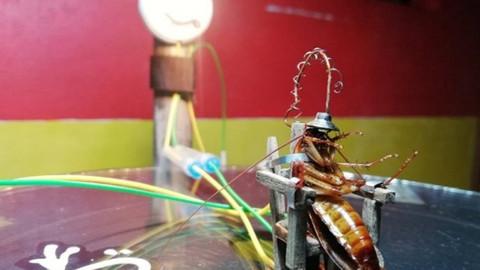 Evine giren böceği elektrikli sandalyeyle idam etti
