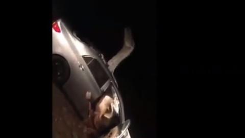Hindistan'da deve araca sıkıştı