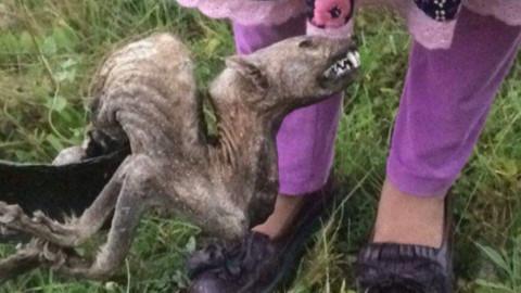 Uzmanlar Artvin'de bulunan hayvan ölüsünü inceledi