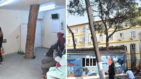 İzmir'de hastane binasının içindeki çam ağacı kesilmedi