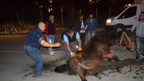 Hamile at sokak ortasına ölüme terk edildi