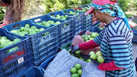 Dursun Şahin: Limonda ihracat Eylül ayı itibariyle durdu.