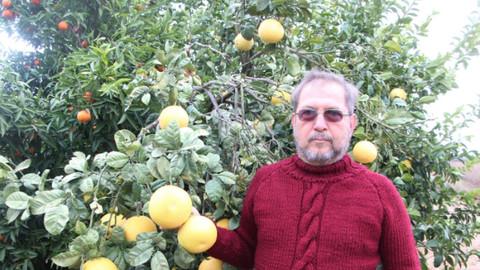 Bir ağaçta dört çeşit meyve yetiştirdi!