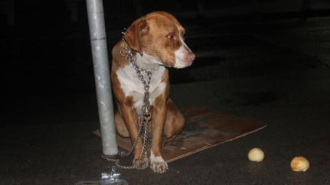 Direğe bağlanarak terk edilen köpek kurtarıldı