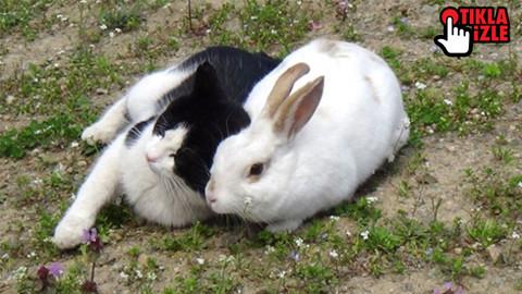 Tavşan ile kedinin dostluğu