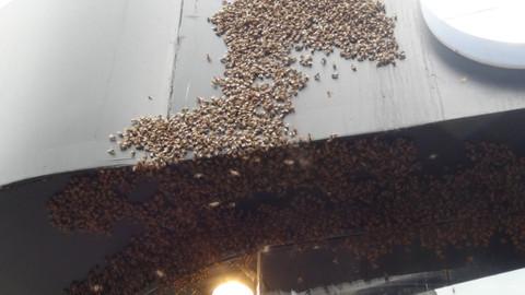 İstiklal Caddesi'ni basan arıların hakkından İranlı turist geldi