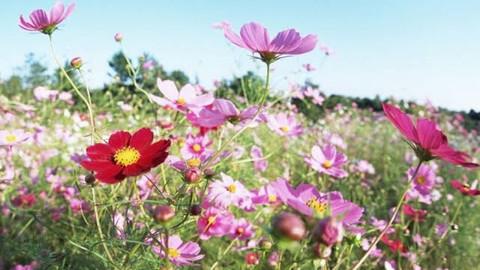 Kır çiçeği alerjisi nedir? Kızım dizisi Kırçiçeği alerjisi tedavisi