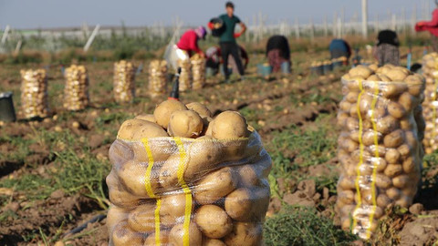 Bakan Pakdemirli: Türkiye, patates üretiminde dünyada ilk 10'da