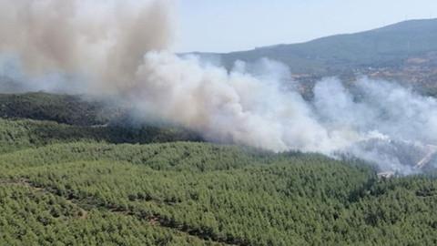 Bodrum'da korkutan orman yangını!