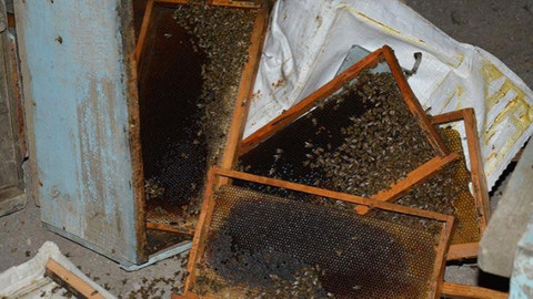 Arı kovanı yüklü TIR kaza yaptı