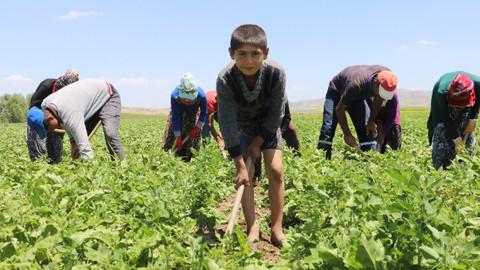 Son Dakika! Tarım işçisi çocuklar tatillerini çalışarak geçiriyor