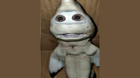 İnsan yüzlü yavru köpek balığı görenleri hayrete düşürdü
