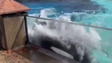 44 yıldır esir olan balina intihara kalkıştı