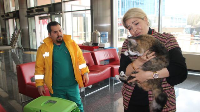 """CHP'nin kedisi """"Şero"""" sağlığına kavuştu"""