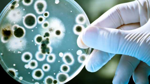 Et yiyen bakteri Buruli ülseri nedir?