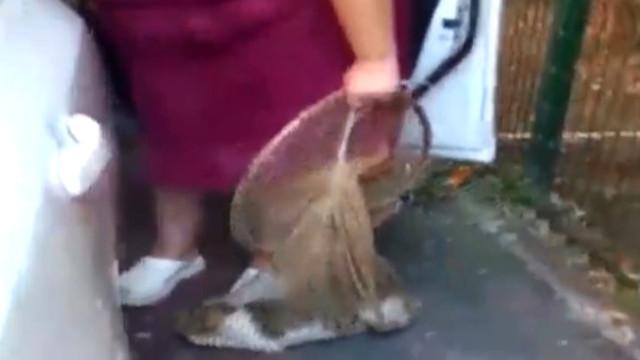 İstanbul'da kedileri toplayan kadın kim? Kedileri ne yapıyor?