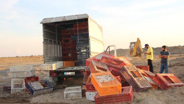 Manavgat'ta tavuklara gaz sıkılarak imha edildi