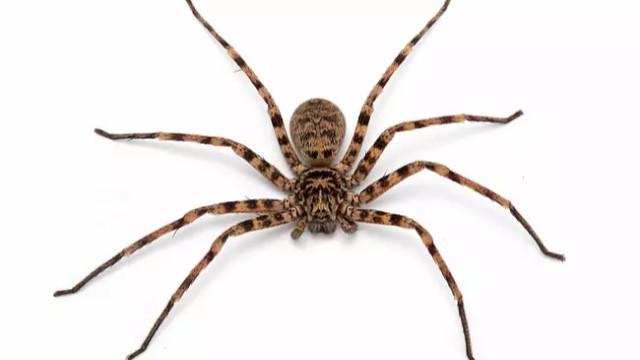 Yeni örümcek türleri keşfedildi