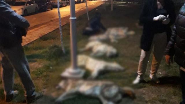 Ankara'da çok sayıda köpek zehirlendi