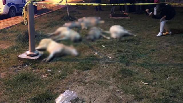 Ankara'da köpek zehirleme olayında tüm şüpheliler serbest bırakıldı