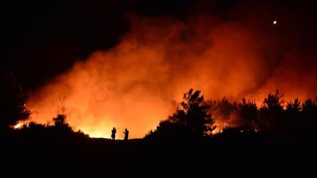 Çanakkale Gelibolu'da orman yangını!