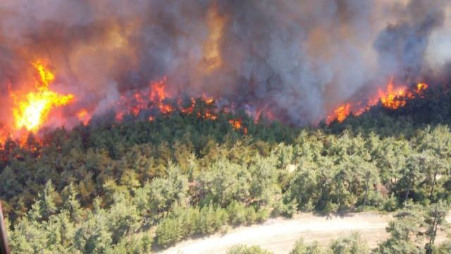 Pakdemirli'den Gelibolu Yarımadası'ndaki orman yangını açıklaması
