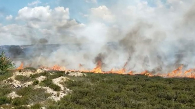 Tuzla'da ormanlık alanda yangın