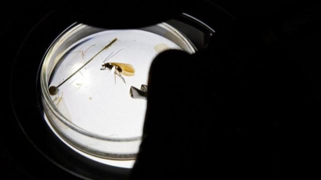Yeni keşfedildi! Koronavirüs böceği