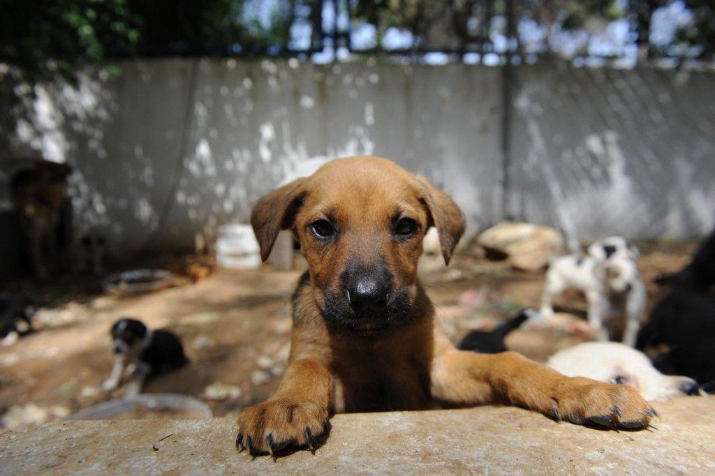 Hayvanlara işkence yapanlara hapis cezası geliyor - Page 1