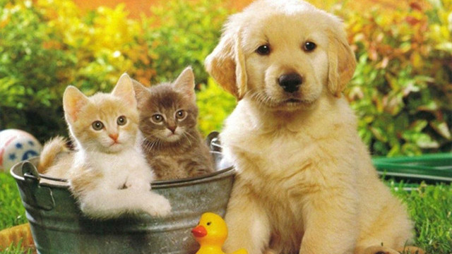 Kedi ve köpek satışı yasaklandı
