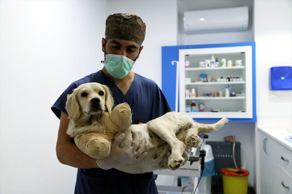 Samsun'da bacakları kesilmiş halde bulunan köpekten iyi haber - Sayfa 2