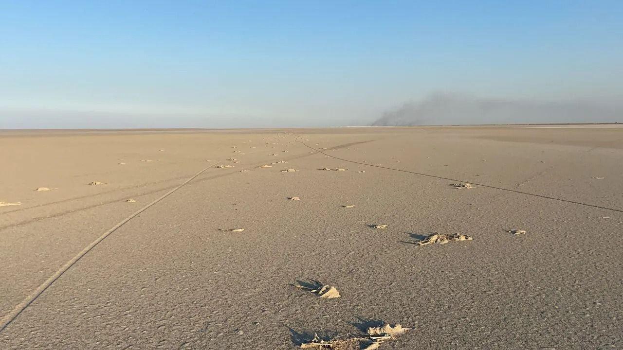 Tuz Gölü'nde toplu flamingo ölümleri - Sayfa 1